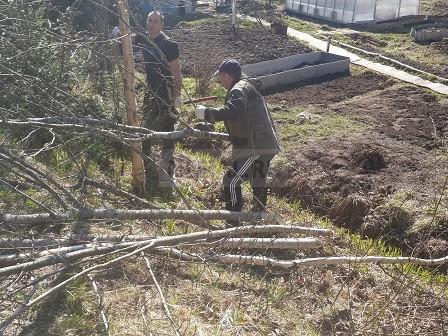 вырубка и вынос деревьев