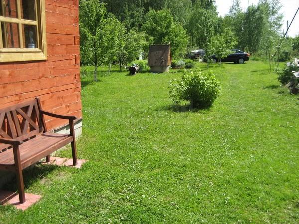 внешний вид засеянного газона