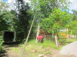 спил дерева с оттяжкой