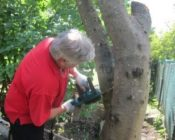 спил-деревьев-частями